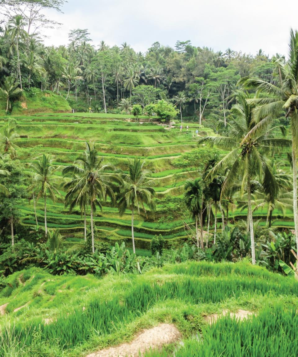 Talilangan rice field,Bali