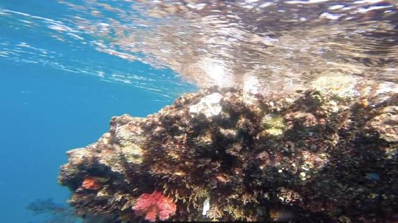 Snorkeling, Komodo islands