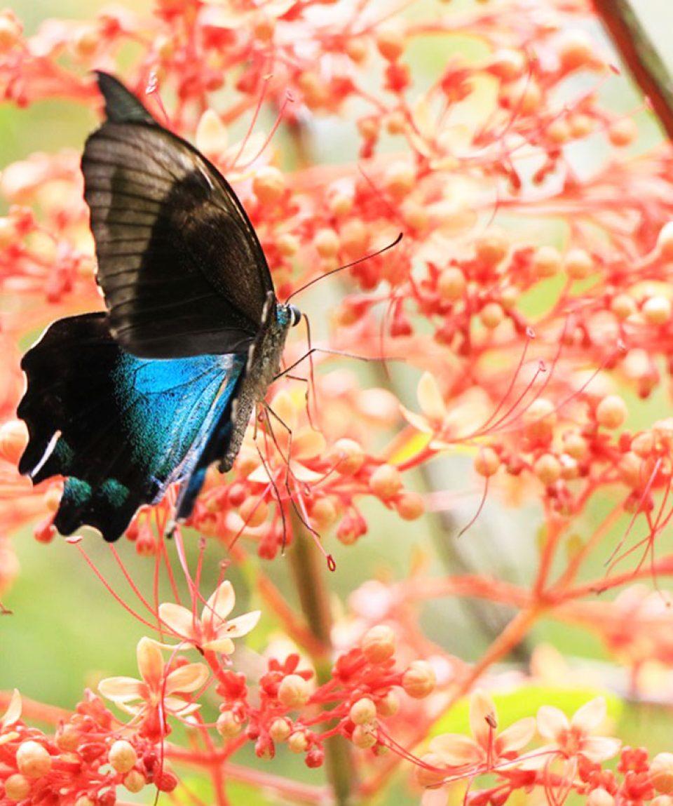 Butterfly,  Butterfly park Bali
